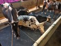 Cow Shed Floor Mat In Chennai