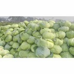 A Grade Fresh Green Cabbage, 20 Kg, Pesticide Free (for Raw Products)
