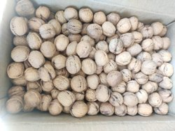 Dry Walnut, Packaging Type: Plastic Bag
