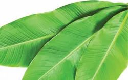 Banana Leaves Box Packing For Exports