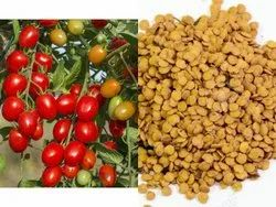 Dried Organic Tomato Seeds, Packaging Type: Plastic Pouch, Packaging Size: 10 Gm