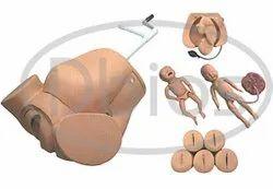 Obstetrics  Mannequins Or Delivery Model