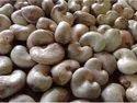 Benin Origin Raw Cashew Nut 48 Lbs 2021 Firstcrop