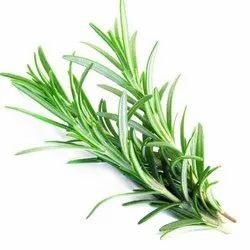 Rosemary Dried Leaves / Rosmarinus Officinalis