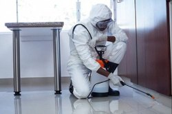 Spray Cockroach Pest Control Services