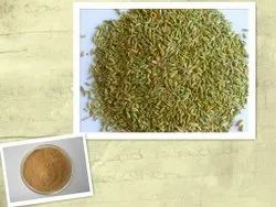 Natcon Naturals Fennel Seed Extract