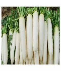 White Dehydrated Parsnip Powder, Packaging Type: HDPE BAG, Packaging Size: 25 Kg