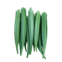 Dark Green A Grade Fresh Lady Finger, Carton, Packaging Size: 10 KG 20 KG