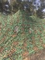 Multispectral Camouflage Net MSCN Desert