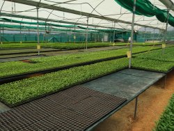 For Garden HDPE Plastic Greenhouse / Shade Net Nursery Construction Setup