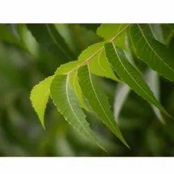 Fresh Neem Leaf
