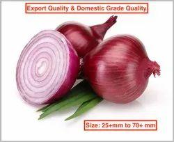 Fresh Nashik Onion (Export Quality & Domestic Grade)