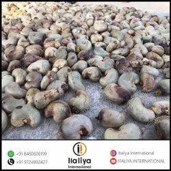 Organic Raw Cashew Nut