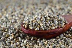 Pearl Millet (Bajara), Pennisetum Glaucum, High in Protein
