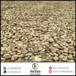 Indian Raw Cashew Nut