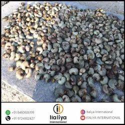 Raw Cashews Nuts