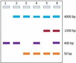 5X DNA Gel Loading Buffer