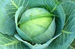 Leafy Green A Grade Fresh Cabbage, Gunny Bag, 5kg