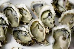 White Fresh Oyster, Packaging Type: Insulated Box