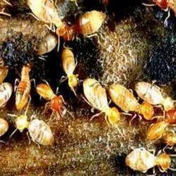 Anti Termite Treatment Service, Hyderabad