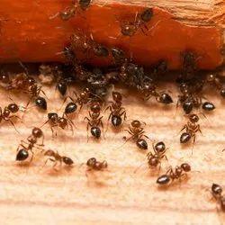 Home Spray Ants Pest Control Service