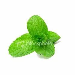 Dry Mint Leaf