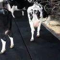COW MAT Supplier in CHENNAI