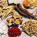 Herb Root