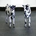 Plain Black Rubber Cow Mat Suppliers In Chennai