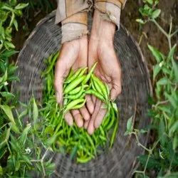 Natural Green Chilli (Agriculture Products), Packaging Type: Corrugated, Packaging Size: 4 Kg