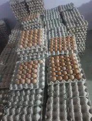 顶级品质Indbro棕色鸡蛋,凌乱和家庭,包装类型:纸箱