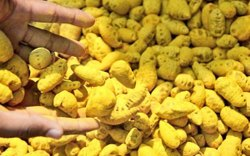 Finger Dried Turmeric Roots, Packaging Type: PP Bag, Packaging Size: 25 Kg