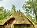 Water Reed for Roof Thatching