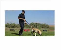 Dog Squad Service