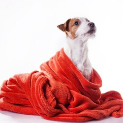 Cotton Terry Towels For Pet