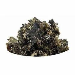 Black Stone Flower / Kall kuva/lichen