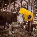 Cow Washing Brush