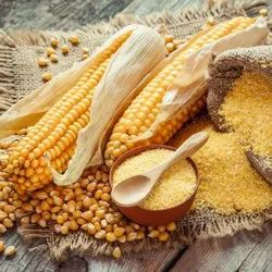 LTG Yellow Maize, High in Protein