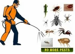 Chemical based Household Pest Control Services