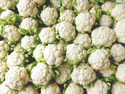 A Grade Maharashtra Fresh Cauliflower, Pesticide Free  (for Raw Products), Packaging: Plastic Bag or Polythene Bag
