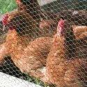 Gabion Hexagonal Chicken Wire Mesh