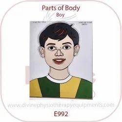 Parts of Body Peg Board Boy
