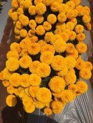 Orange Super ball F1 Merigold seeds, For Agriculture