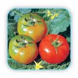 red HYBRID TOMATO - No. 3618, For Agriculture, Packaging Type: Pouch