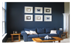 Interior Painting Services, Location Preference: Nagpur