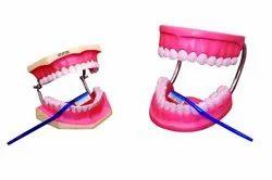 Human Dental Care