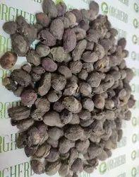 Jamun Seeds - Jamun Guthli - Syzygium Cumini   Seeds