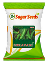 Shravani F-1 Hybrid Cucumber Seeds
