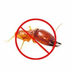Termite Pest Control Services, in On Site
