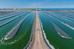 Spirulina Cultivation Turnkey Project